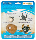 Life Cycle of a Green Sea Turtle - 4 Piece Safariology Set - Off The Wall Toys and Gifts