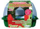 Sugar Baby Watermelon Sprout 'n Grow Greenhouse Kit w/Seeds - Off The Wall Toys and Gifts