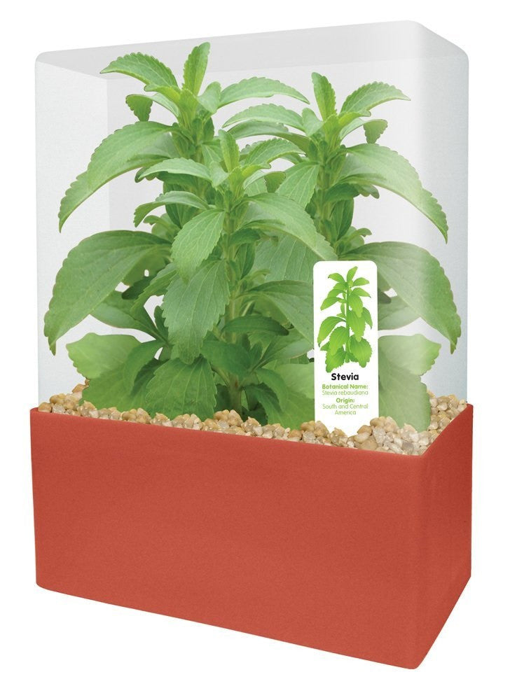 Plants That Work Sweet Leaf Plant Cube - Off The Wall Toys and Gifts