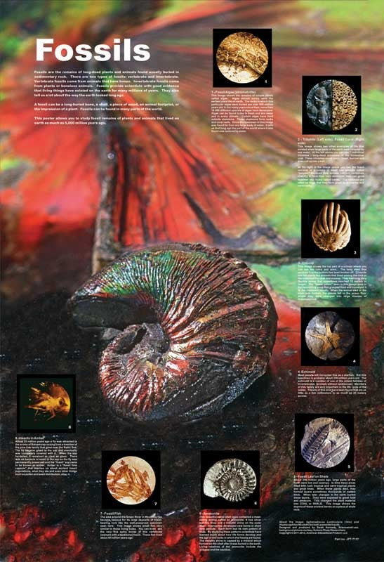 "Fossils Under the Microscope Poster - 38x26"" - Off The Wall Toys and Gifts"