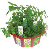 The Tea House Seeds & Terrarium Kit Grow Herbal Teas - Off The Wall Toys and Gifts