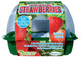 Grow Your Own Strawberries Windowsill Garden Kit w/Seeds - Off The Wall Toys and Gifts