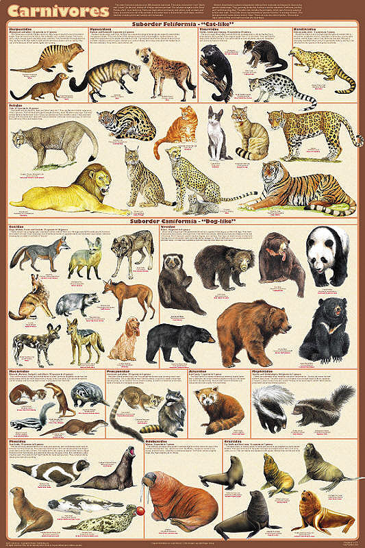Laminated Carnivorous Animals Poster 24x36 - Off The Wall Toys and Gifts