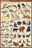 Carnivorous Animals Poster 24x36 - Off The Wall Toys and Gifts