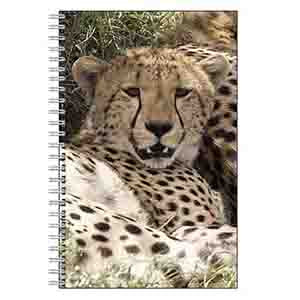 Cheetah Journal