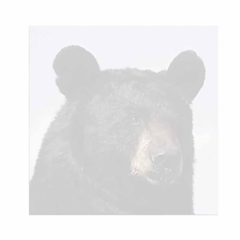 Black Bear  Sticky Notes