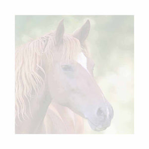 Brown Horse Sticky Notes