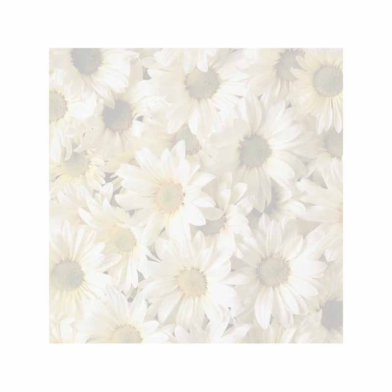 Daisies Sticky Notes - Set of 3 - Blank or Personalized