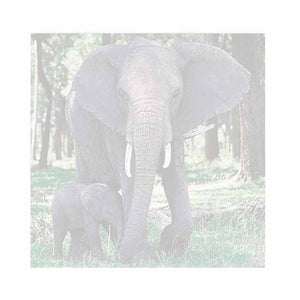 Elephant and Baby Sticky Notes