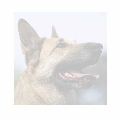German Shepherd Sticky Notes