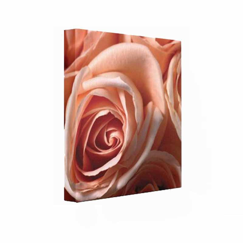 Peach Rose Wall Art Hanging