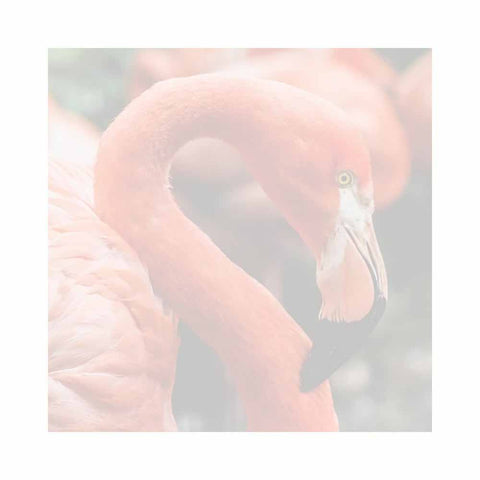 Pink Flamingo Sticky Notes - Set of 3 - Blank or Personalized