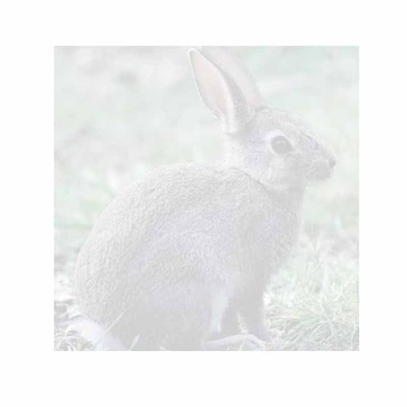 Rabbit Sticky Notes - Set of 3 - Blank or Personalized