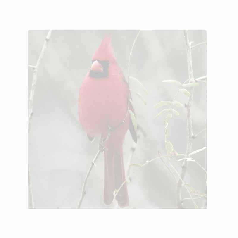 Cardinal Bird Sticky Notes - Set of 3 - Blank or Personalized
