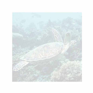 Sea Turtle Sticky Notes