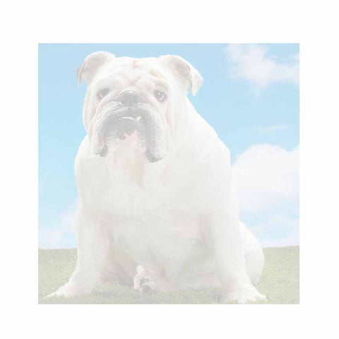 White Bulldog Sticky Notes - Set of 3 - Blank or Personalized