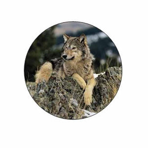 Wolf Animal on Rocks Stickers