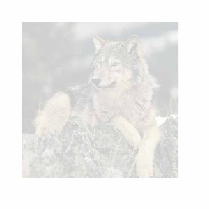 Wolf on Rocks Sticky Notes - Set of 3 - Blank or Personalized