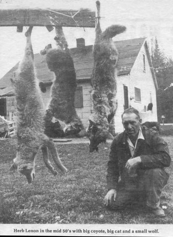 herb-lenon-timber-wolf-bob-cat-coyote-trapped-1950