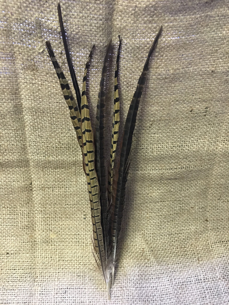 Pheasant Feather Writing Quills