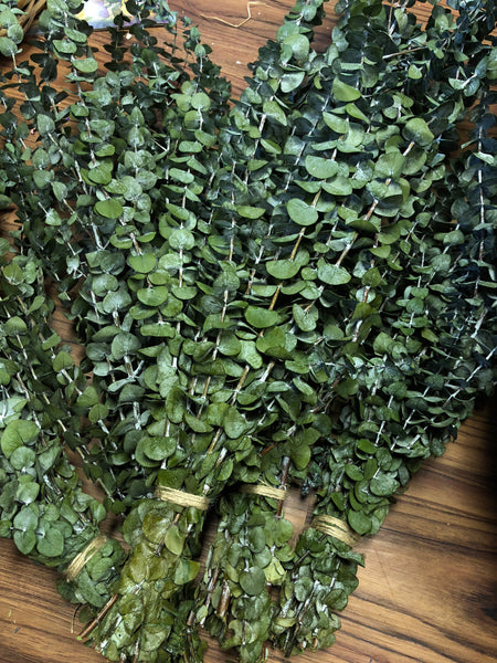 Eucalyptus - Large Bundle