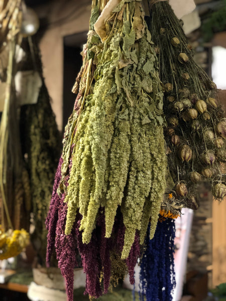 Amaranthus Upright