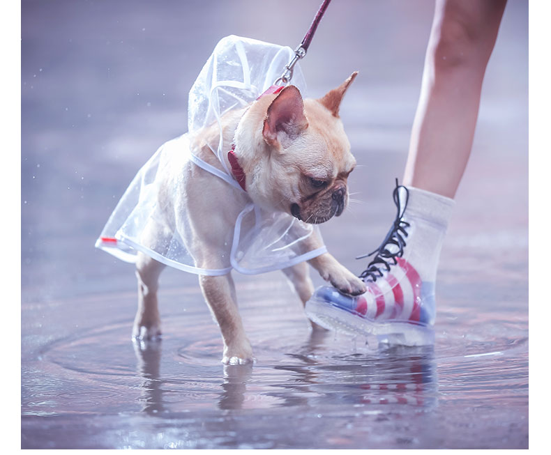 Barking Raincoats