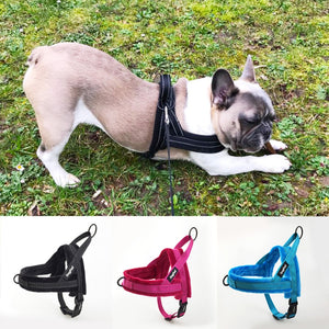 No-Pull Dog Harness (Lead)