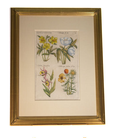 Pair of Wildflowers  Original Antique Dutch Engraving  by Emanuel Sweert