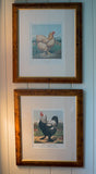 Poultry - Original Antique English Lithograph by Cassells