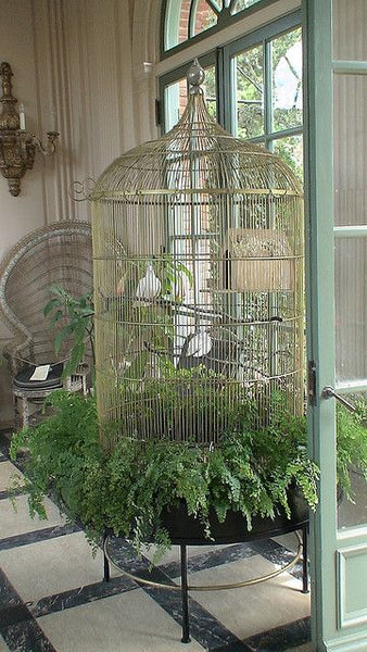 Huge birdcage in garden room with planted ferns