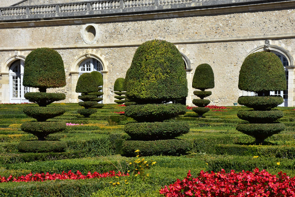 Classic French topiary French garden design ideas