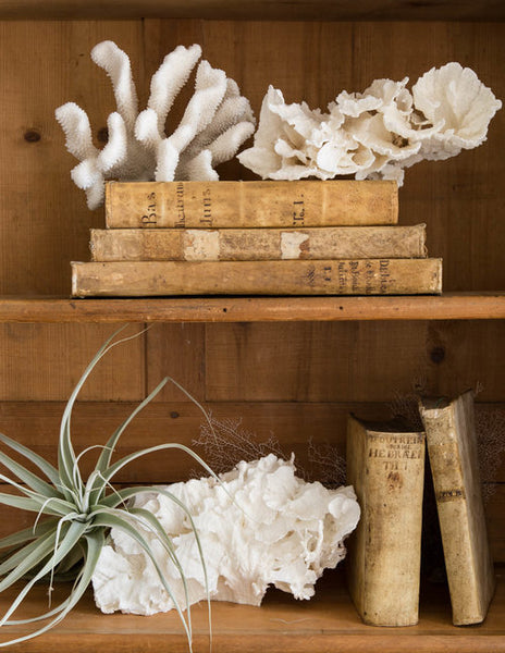 Old books and coral open storage shelf decoration rustic luxury modern farmhouse decor wedding gift online from France