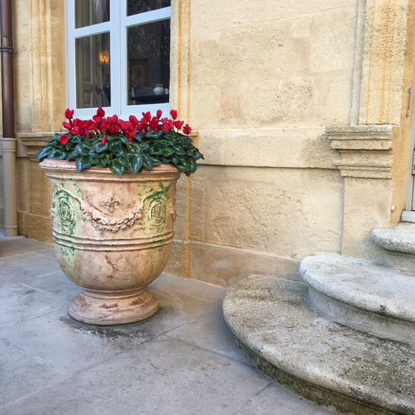 French Anduze urn with cyclamen