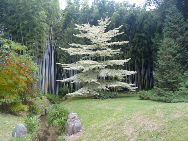 Vacations in France South of France Anduze bamboo open garden fall