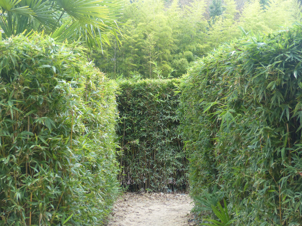 Vacations in France South of France Anduze bamboo open garden