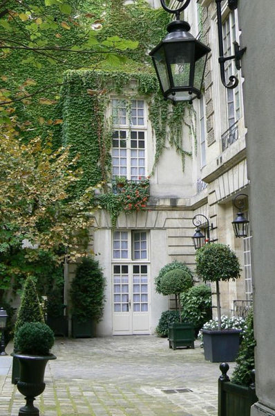 Courtyard in Paris with boxwood topiary and ivy cobblestones