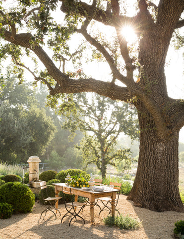Patina farm rustic dining setting in the garden under the huge tree