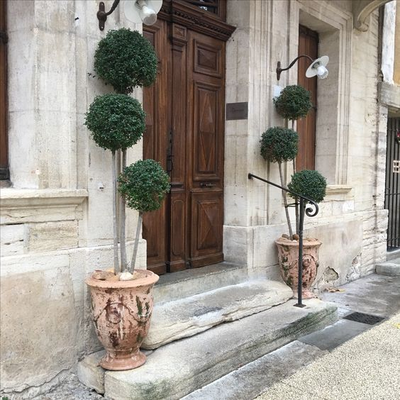 Anduze urns planted with topiary