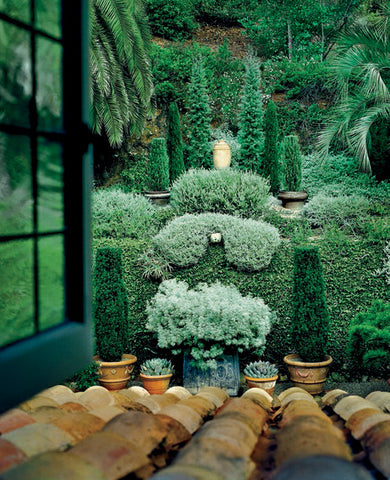 Looking out the black framed french window to the layered hedging, with pots and topiary - Saladino