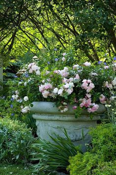 Antique French urn planted with pink flowers French garden ideas