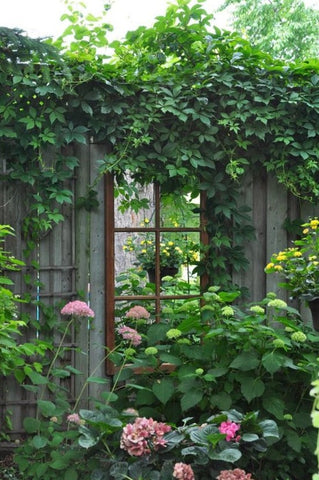 Framed french mirror in garden ivy flowers buy french mirrors direct from France modern farmhouse