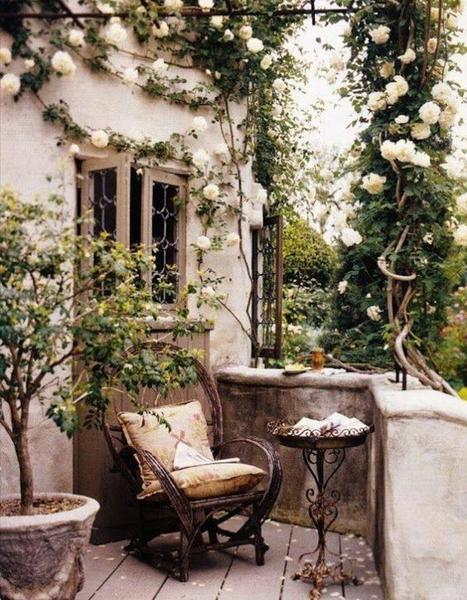 French terrace climbing rose