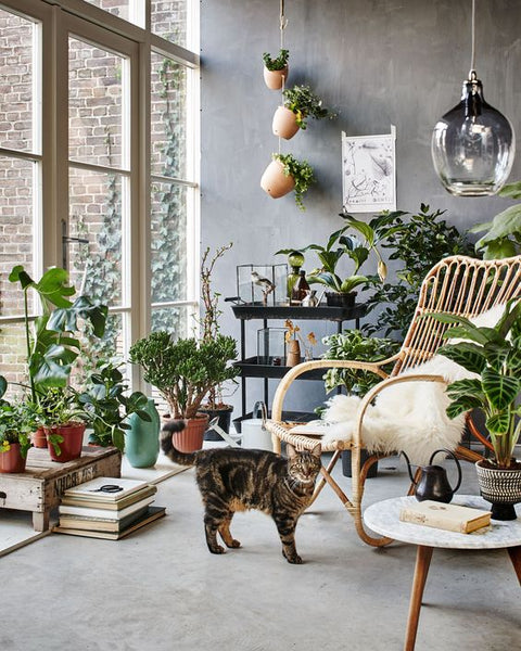 Apartment garden room wicker furniture pot plants indoor plants french windows