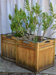 Pair of vintage French Versaille planters - teak