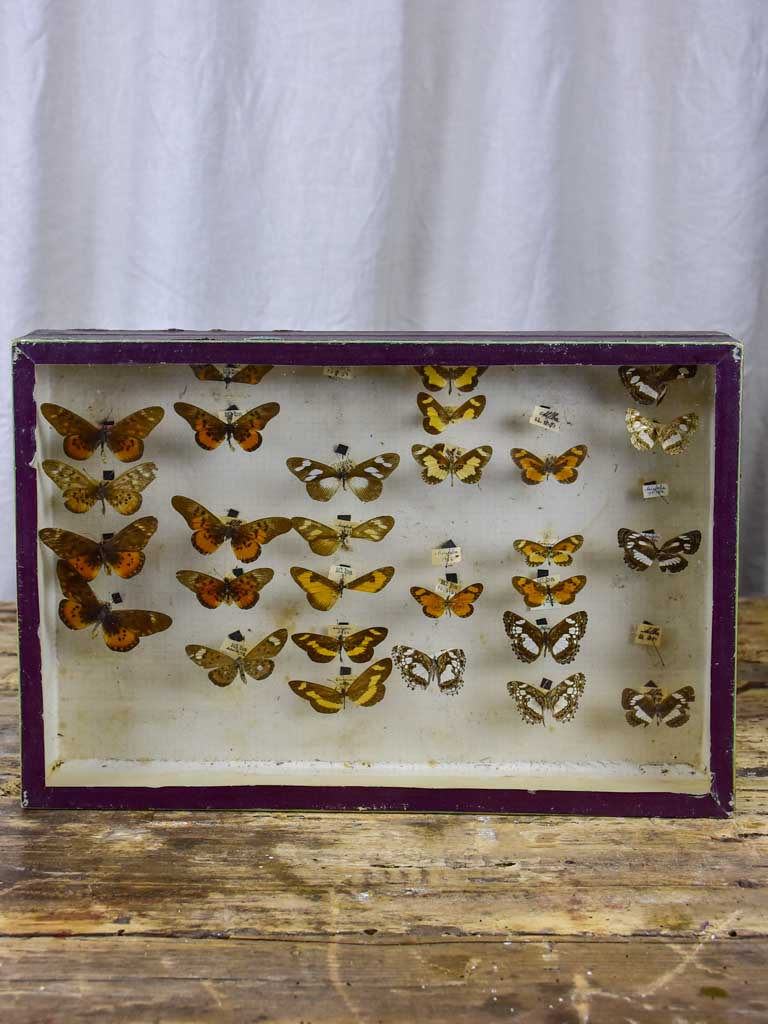 Antique French framed butterfies