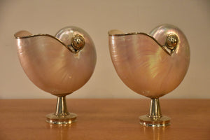 Pair of mounted pearlescent nautilus shells