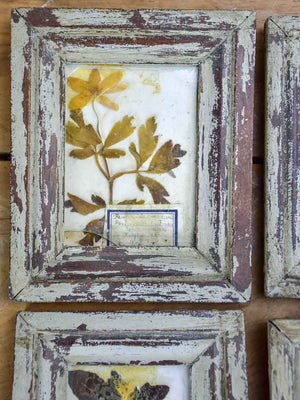 Collection of 9 small framed pressed flowers