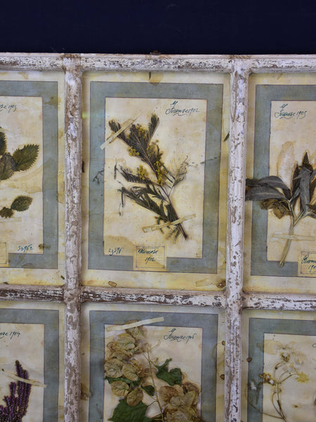 Artisan-made framed herbarium