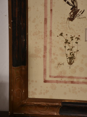 Italian botanical flowers in an antique black and brown frame